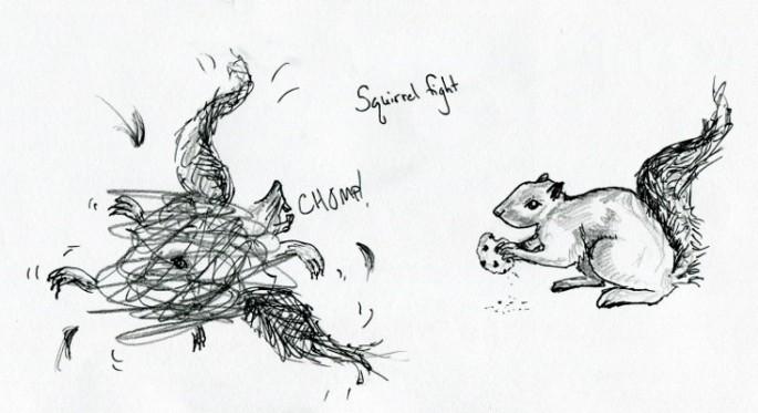squirrelfight
