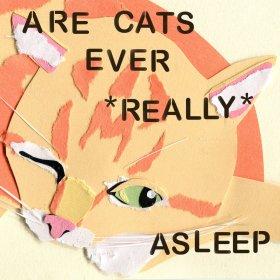 arecatsasleep