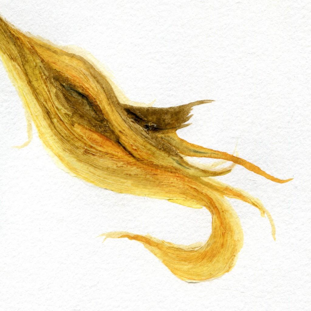 hairstudy