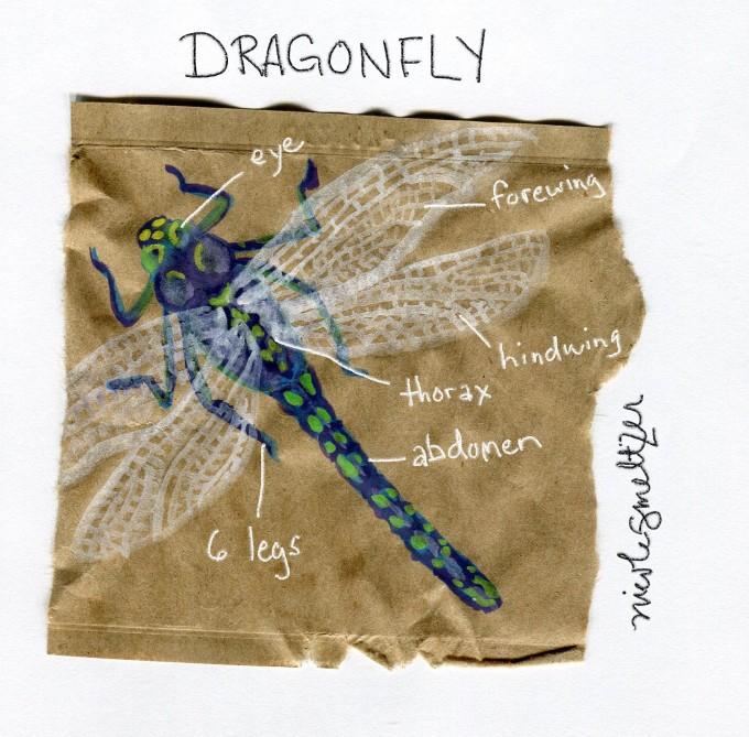 dragonfly_web