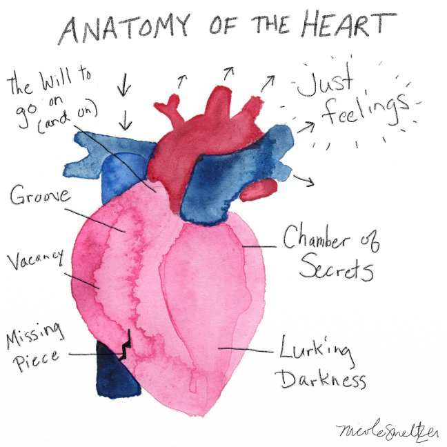 anatomy-of-heart