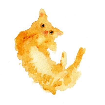 kittyorangetricks