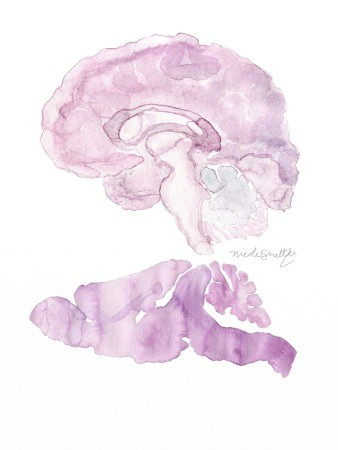 human and mouse brains small