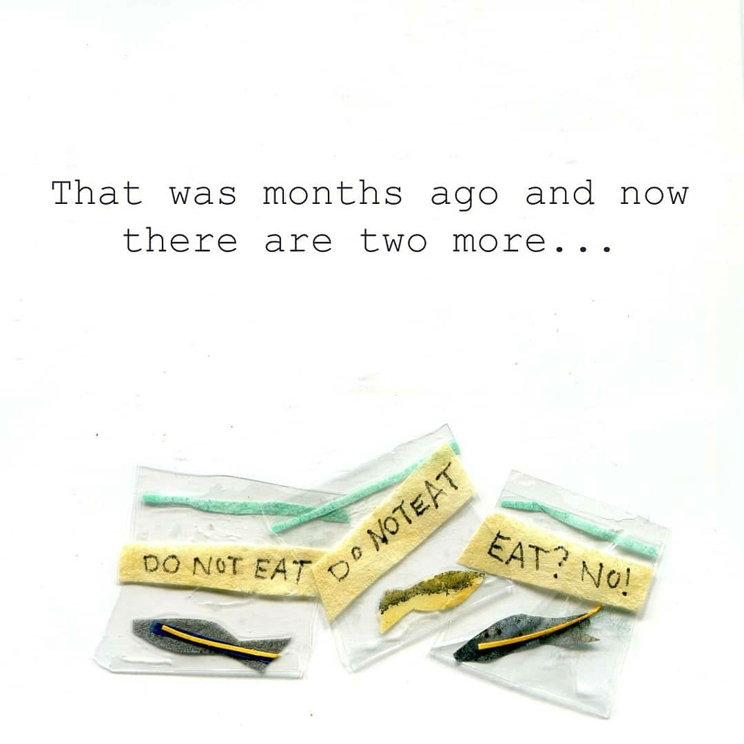 That was months ago and now there are two more... (Illustration: Three baggies of labeled, dead fish)
