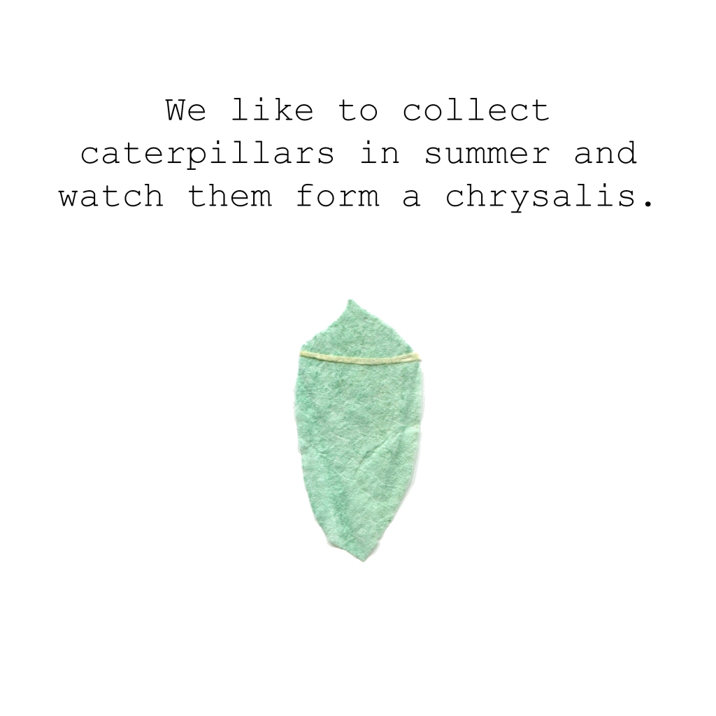 We like to collect caterpillars in summer and watch them form a chrysalis.